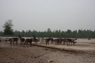 стойбище Белый Яр Belyj Yar stojbishe nomad camp