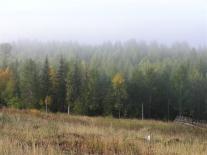 Тайга у Муторая. Утро. Туман