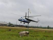 Вертолет и корова