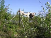 Учак (верховой олень) сопровождает хозяина в землю мертвых