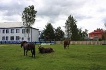 Лошади Каргаска