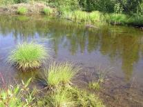 Болотистое озерко у Эконды
