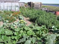 Сургутихинский огород